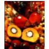 lowongan kerja  KARYAMAS PLANTATION | Topkarir.com
